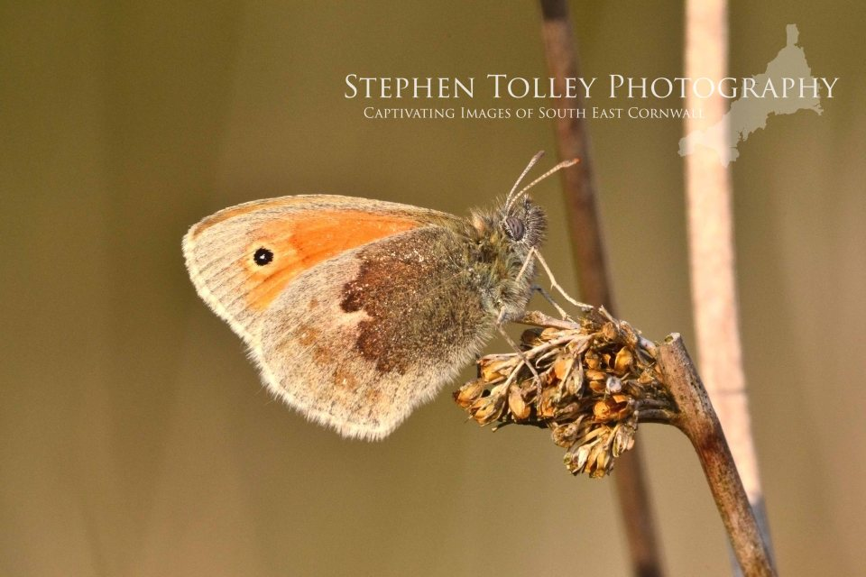 small heath2
