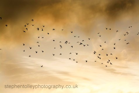 Flock of wading birds flying through sky
