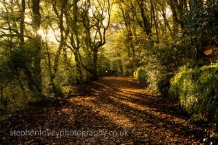 Kilminorth woodland path