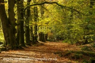 Autumn path at Golitha