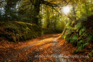 Autumn Lane on the Glynn Valley
