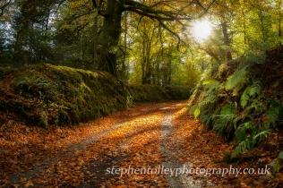 Autumn Lane on the Glynn Valley
