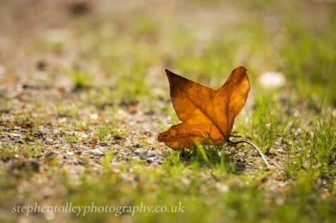 Lone leaf on a summer path