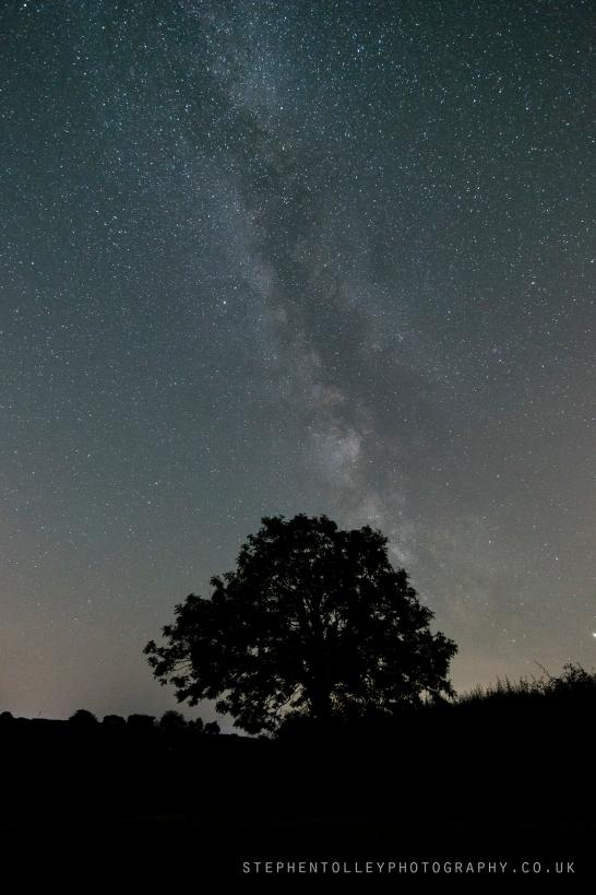Milky way over Tree in fields